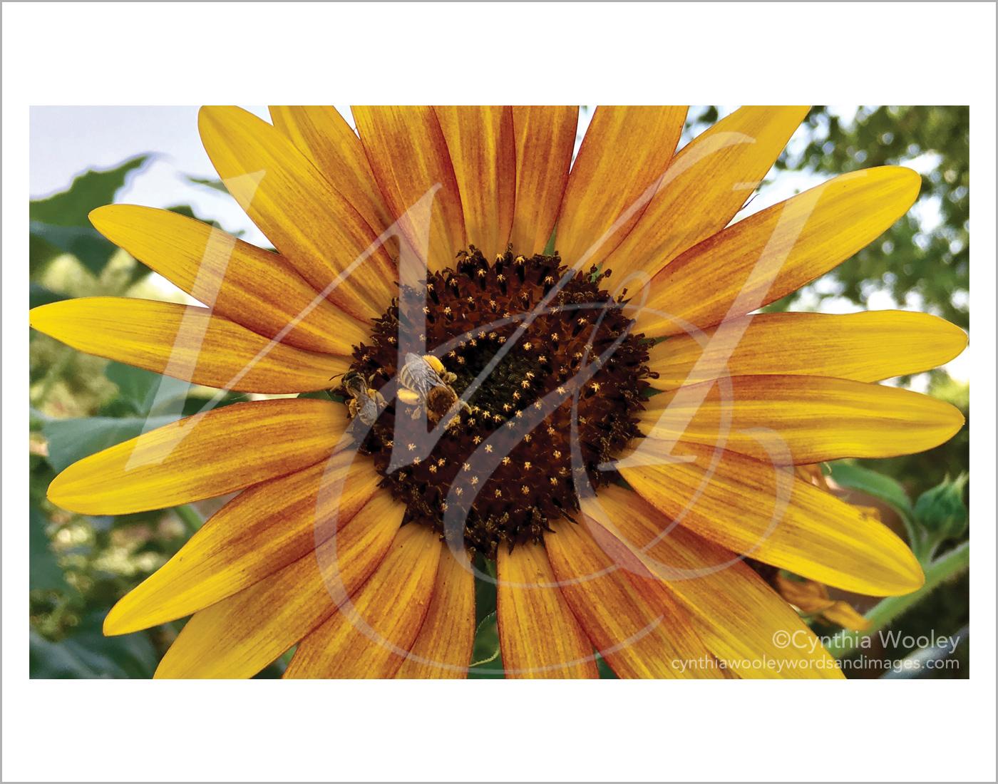 Gathering Pollen - New Mexico: Print