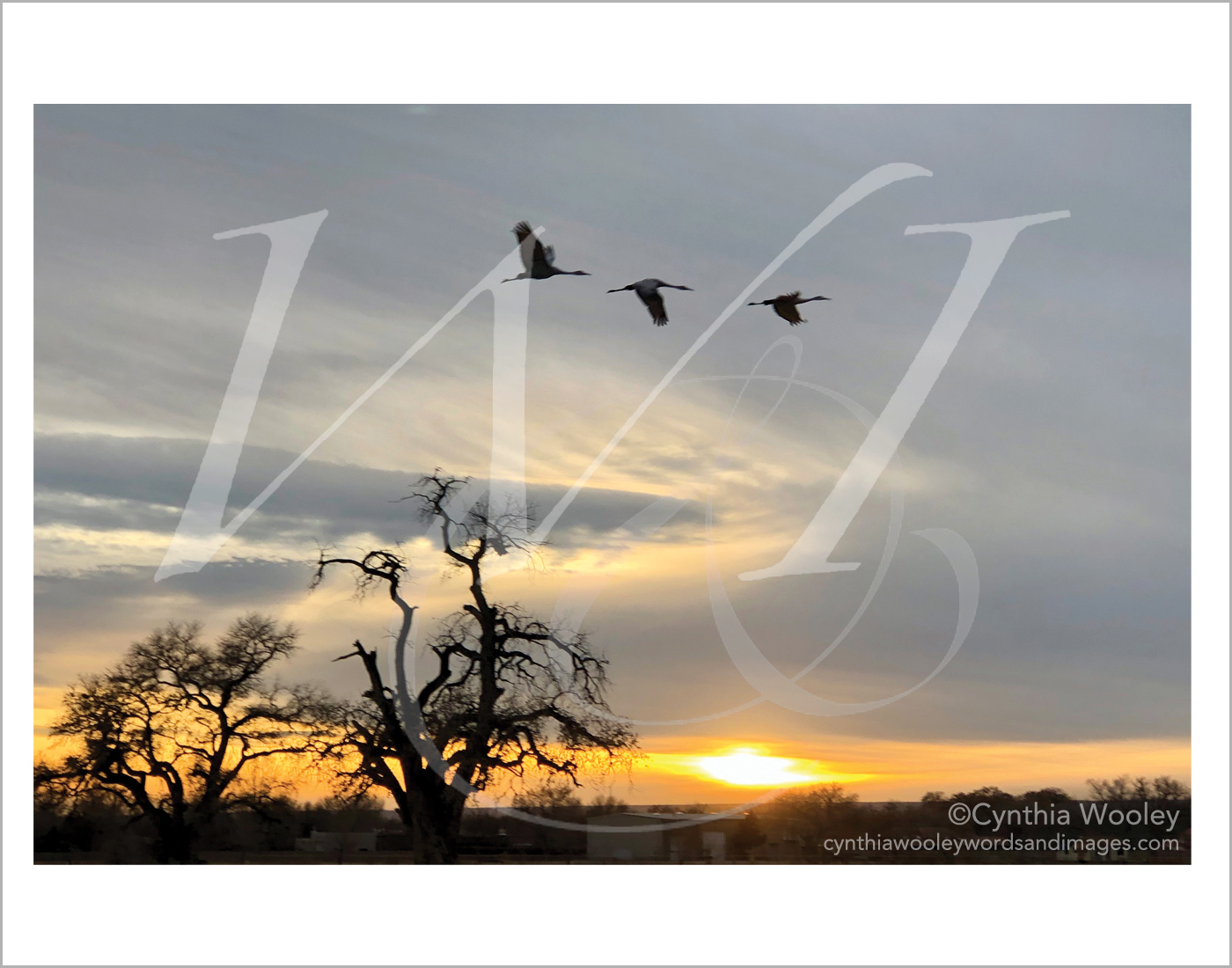 Flying Home for the Night - New Mexico: Print