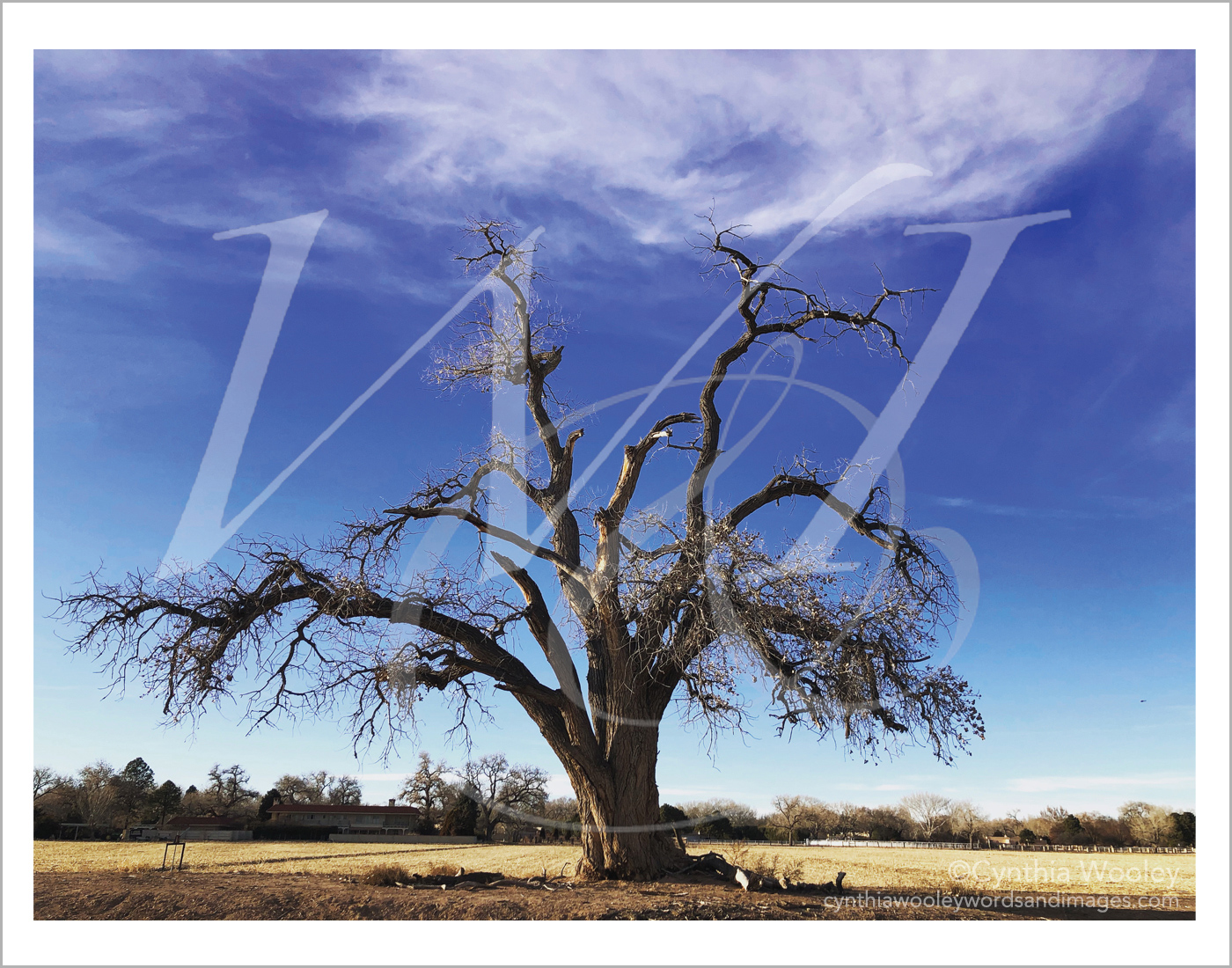 Reaching for the Clouds - New Mexico: Print